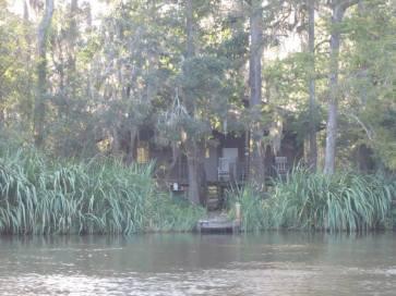 swamp7